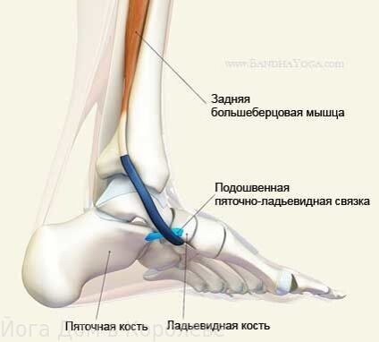 anatomy-foot-1
