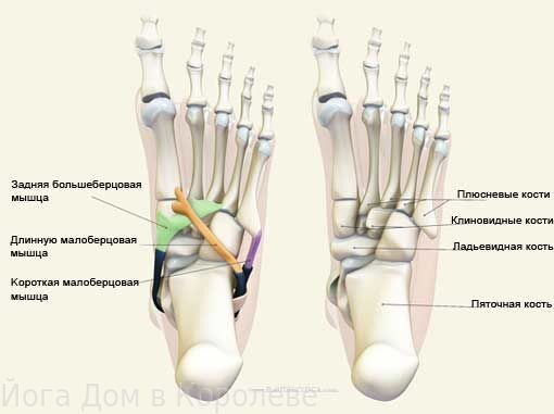 anatomy-foot-22